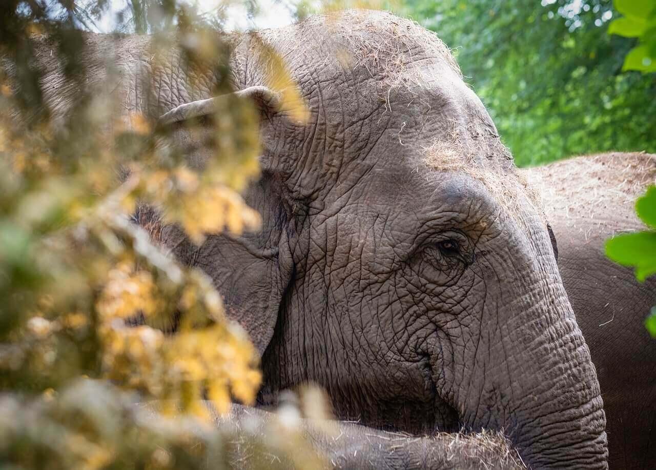 slonovi marihuana Trendy 2